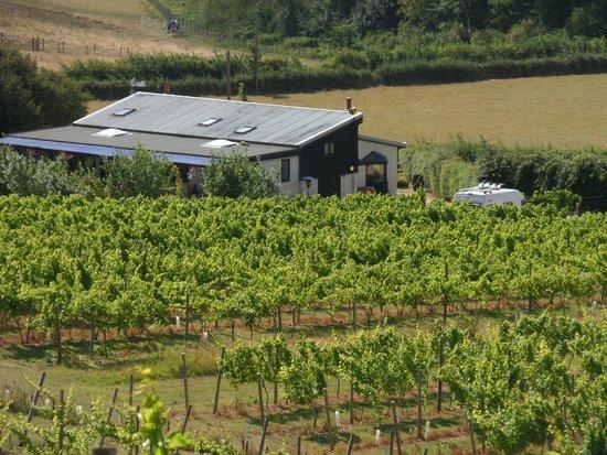 Adgestone Vineyard: 5