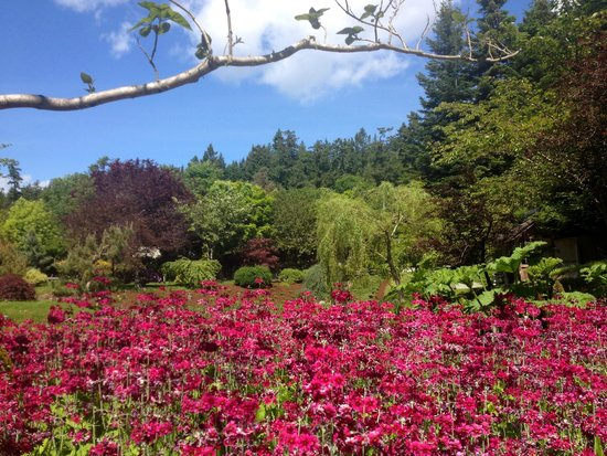 Mayne Island, Canada: in bloom