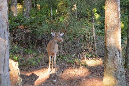 Wildwood Manor Bed and Breakfast: Deer feeding at Wildwood Manor