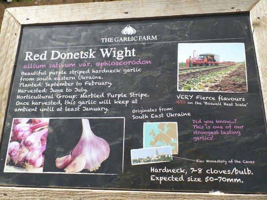 The Garlic Farm: 4