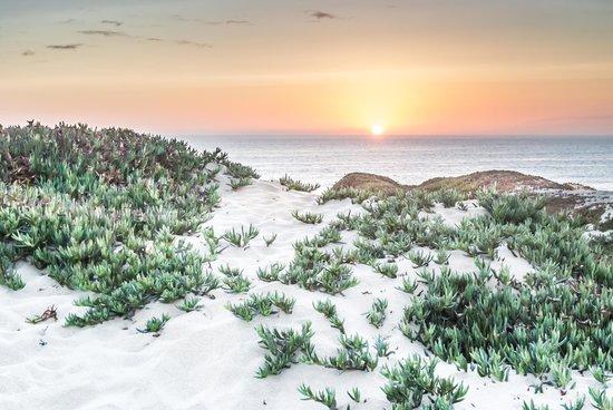 Monterey Beach Dunes Inn : Sunset from the Dunes