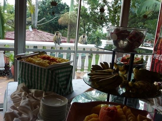 Imperial Botanical Beach Hotel: monkeys checking out the breakfast buffet