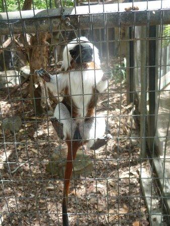 St. Maarten Zoo: Accessibilité des animaux (barrière de protection cassée)