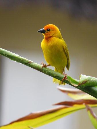 Neptune Paradise Beach Resort & Spa: Oiseau dans les mangroves
