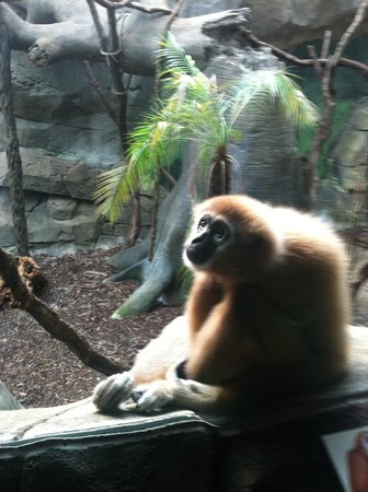 Kölner Zoo: чудесное место