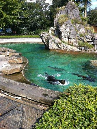 Koelner Zoo : полный релакс