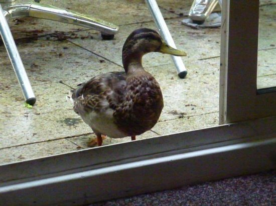 Center Parcs Longleat Forest: A surprise Visitor