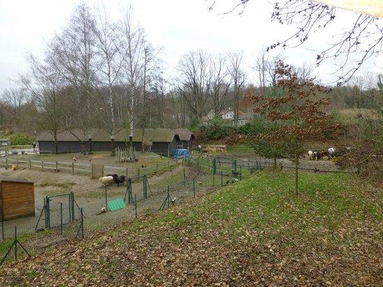 Center Parcs Le Lac d'Ailette : mini ferme