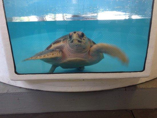 Gumbo Limbo Nature Center: turtle