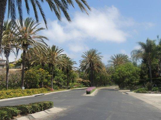 Park Hyatt Aviara Resort: L'avenue qui mène à l'hôtel assez isolé mais très résidentiel