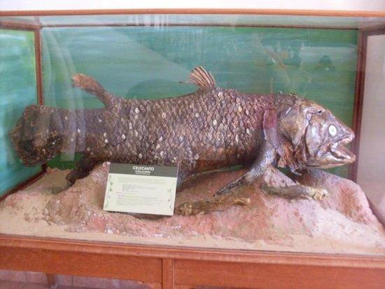 Natural History Museum: celacanto empalhado