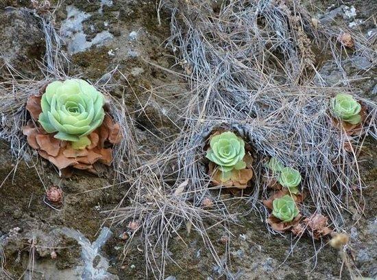 Caldera de Taburiente National Park: plantas que sobreviven en climas áridos