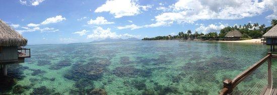 Le Meridien Tahiti: どこまでも続く遠浅の海。綺麗な熱帯魚がいっぱい泳いでいます。