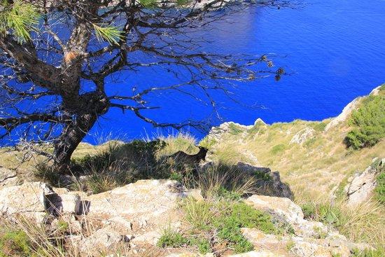 Cap de Formentor: surprise