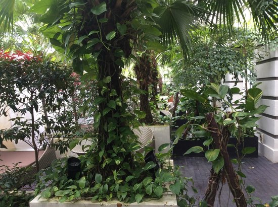 Hotel Fort Canning : Palm trees creating a nice shade as you sit in the garden