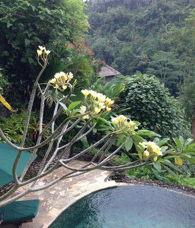 The Royal Pita Maha: バンガローには、プライベートプールがついていました。