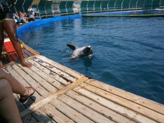 DolphinPark Marmaris: tricks