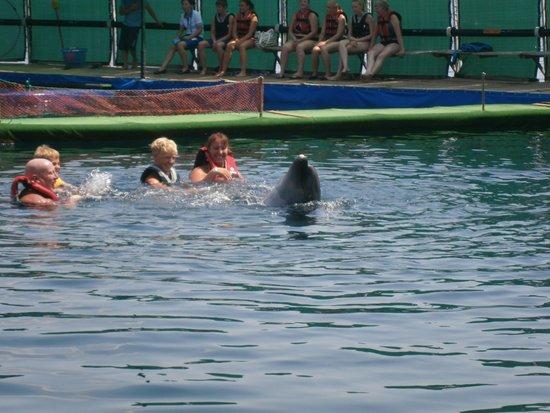 DolphinPark Marmaris: swimming