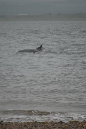 Chanonry Point : So close to shore