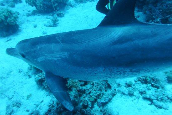 New Son Bijou Diving Center: Dolphin