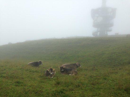 Rigi: The summit