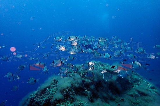 Acqua Life Dive Center S. L.