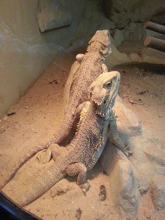 Amazonia - World of Reptiles: :)