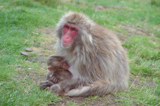 Highland Wildlife Park: Feeding baby