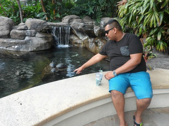 Hilton Hawaiian Village Waikiki Beach Resort: Turtles