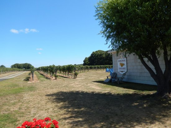 Castello di Borghese / Hargrave Vineyard: vineyards near the outdoor seating