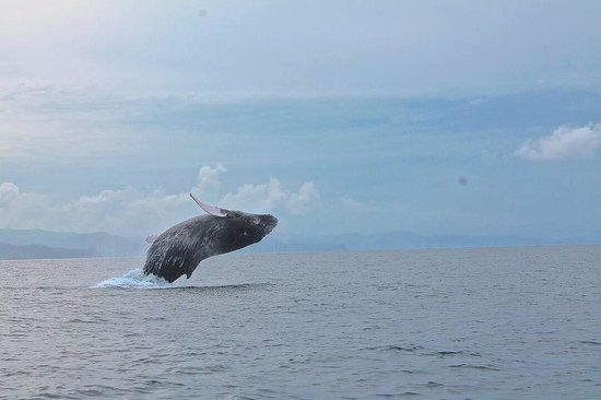 Carrillo Adventures & Travel : Carrillo Adventures, Dolphin watching Tour with a whale show