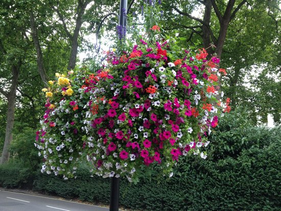 Lancaster Gate Hotel: Outside hanging baskets.