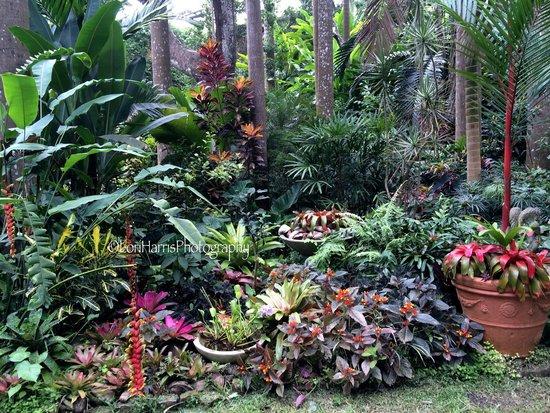 Hunte's Gardens : Heaven on Earth #loriharrisphotography