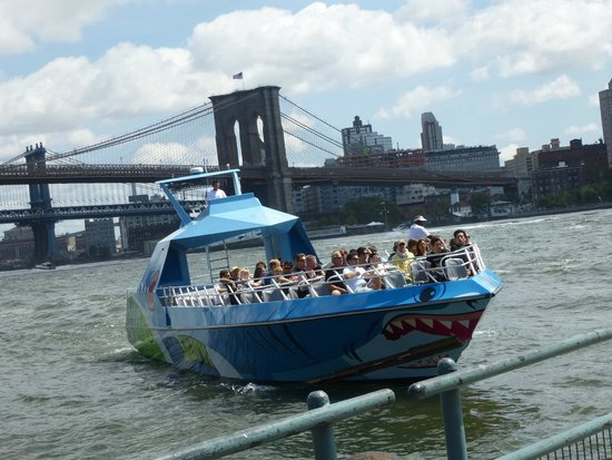 Shark Speedboat Ride
