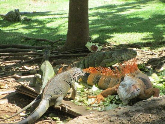 Gumbalimba Park: Lizards