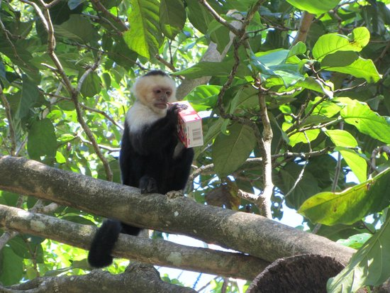 Gumbalimba Park: Monkey steals cereal