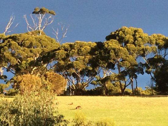 Kangaroo Island Odysseys : Nature