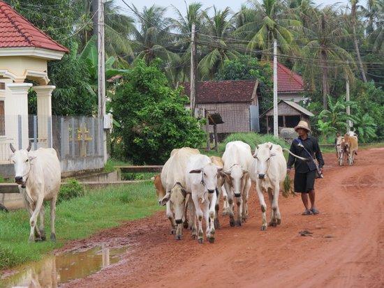 Quad Adventure Cambodia Siem Reap: sights of Siem Reap