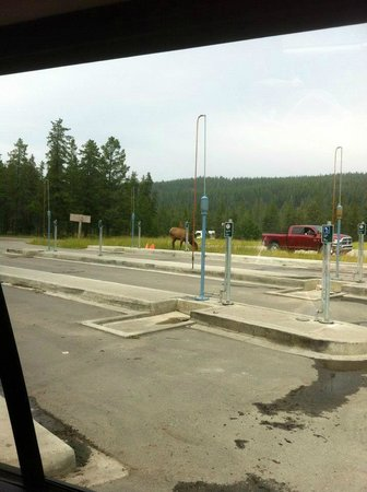 Whistlers Campground: Dumping station