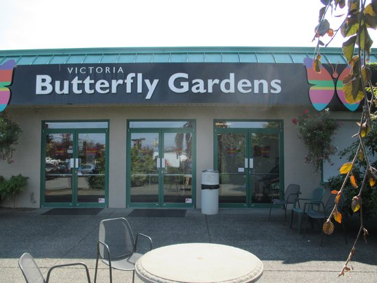 Butterfly Picture Of Victoria Butterfly Gardens Central
