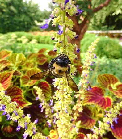 The Arboretum: lots of bees and butterflies