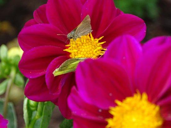 The Arboretum: flowers