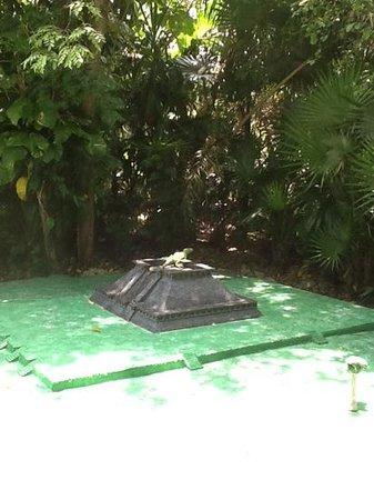 Discover Mexico Cozumel Park: cheeky Iguana at Discover Mexico, Cozamel