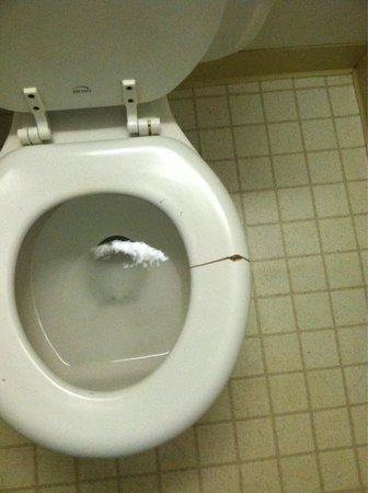 Mesa Inn Grand Junction : Broken toilet seat, hair on the floor (eww)