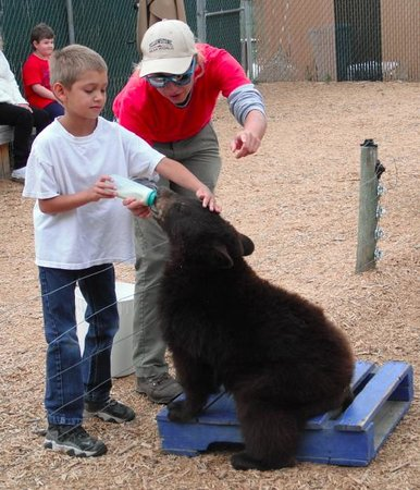 Yellowstone Bear World : Feeding the Cubs