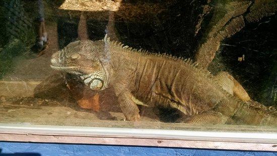 Bailiwick Animal Park : Very cool!