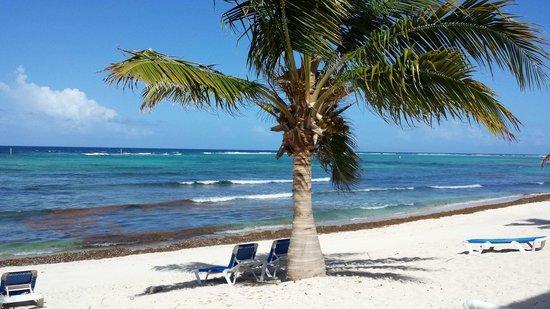 Wyndham Reef Resort : View from room 131B