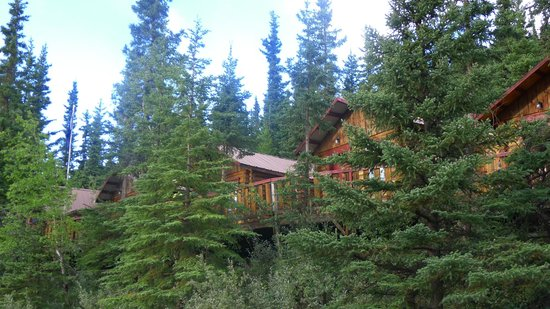 Denali Cabins: Cabins in the woods