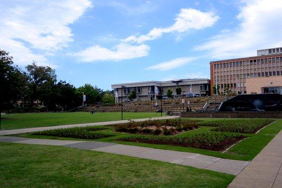 Newcastle City Hall: Newcastle