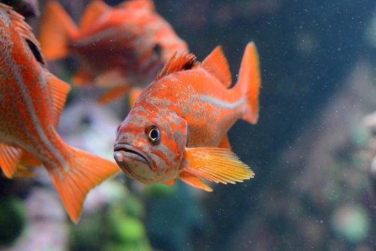 Vancouver Aquarium: Fishy